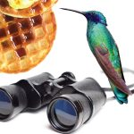 Birding & Brunch graphic with photo collage of blue-green hummingbird, waffles, and binoculars